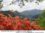 GW前山よりヤマツツジと新緑の山.jpg